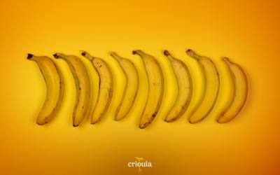Banana: o fruto da musa paradisíaca!