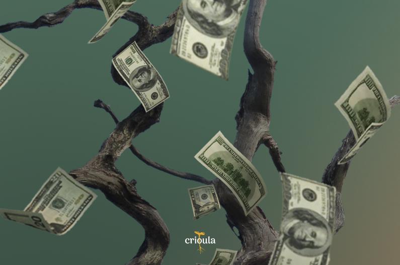 Dinheiro não dá em árvore? | Conheça o Babaçu